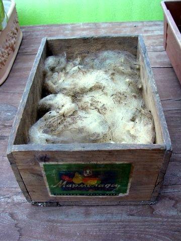 zabojcek ovcja volna