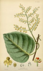 The_flora_homoeopathica_(8260582845)