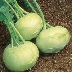 KOLERABICA BELA Sadimo na razdaljo 20 – 30 cm. V gosto posajenih skupinah se razvijejo manjše rastline, ker dušijo druga drugo. Dobri sosedje: blitva, boreč, zelena, rdeča pesa, česen, kapucinka, geranija, grah, žajbelj, koper, kumare, krompir, čebula, meta, origano, paprika, por, redkvica, repa, rožmarin, solata, šparglji, špinača. Slabi sosedje: gorjušica, jagoda, komarček, paprika, paradižnik, visoki fižol.