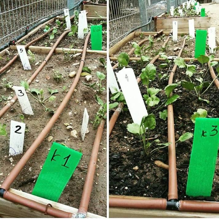 biooglje-proti-pesticidom