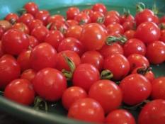 PARADIŽNIK DIVJA POLIČKA (cherry paradižnik) Sorta cherry paradižnika, ki daje majhne rdeče plodove s premerom od 1 do 1,5 cm. Rastline so zelo odporne, in zrastejo od 1 do 1,5 m višine. Zelo dobro obrodijo. Zelo robustna, neodvisna rastlina, ki dobro prenaša tudi manj ugodne pogoje. V manj ugodnih pogojih je manjša, a obrodi enako količino plodov. Paradižnike sadimo tako, da zasujemo steblo do prvih listov. Iz zasutega stebla bodo pognale korenine, zaradi česar bo rastlina bolj stabilna in bolje nahranjena. Sadimo jo na razdaljo od 70 do 100 cm. Dobri sosedje: amarant, janež, boreč, bazilika, zelena, rdeča pesa, črna redkev, česen, kapucinka, geranija, fižol, žajbelj, kopriva, kolerabica, kozmos, čebula, melisa, korenje, meta, ognjič, origano, peteršilj, petunija, por, radič, redkvica, glavnata solata, listnata solata, šparglji, špinača, timijan, drobnjak. Slabi sosedje: brokoli, cvetača, grah, jagode, ohrovt, brstični ohrovt, koromač, koper, kolerabica, kumare, krompir, koruza, zelje, mačja meta, marelica, oreh, paprika, jajčevec, repa, rožmarin.